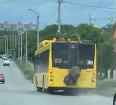 У Чернівцях бабуся-екстремалка їхала містом, причепшись до драбини тролейбуса (ВІДЕО)