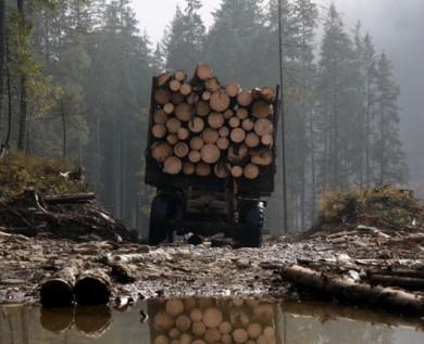 """Закон """"Слуг народу"""" про заборону вирубки лісів тільки спростив їх знищення, – екологи"""