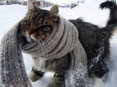 Буковинцям приготуватися: до нас йде справжня зима зі снігом і морозами