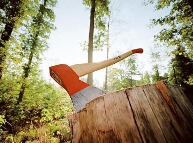 На Вижниччині дерево вбило лісоруба