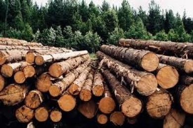 Спростування міфів: Як земельна реформа допоможе захистити ліси, водойми та заповідні території Чернівецької області