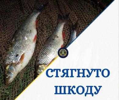 Понад 52 тис грн штрафу – на Буковині з браконьєра стягнуто шкоду, завдану незаконним виловом риби