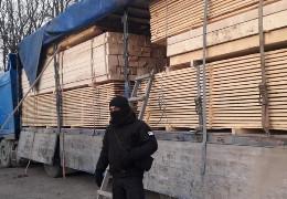 На Прикарпатті та Буковині викрили нелегальний експорт карпатської смереки на мільйони гривень