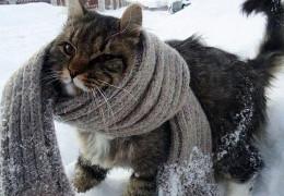 На Благовіщення у Карпатах справжня зима: до 9 градусів морозу