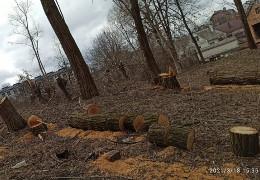 На Гравітоні почали масову вирубку дерев: мешканці б'ють на сполох, - МБ