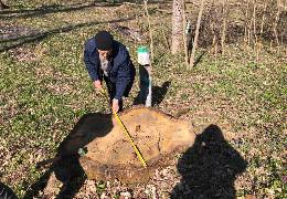 На території Герцаївського держлісництва незаконно вирубали дерев майже на мільйон гривень