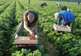Зарплати впадуть, а конкуренція зросте? Чому заробітчани змушені повертатися в Україну і що на них чекає