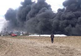 Чорні густі хмари диму: показали на відео, як на Буковині спалюють тисячі свиней, в яких виявили небезпечну хворобу