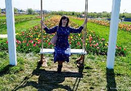 У Мамаївцях розцвіло тюльпанове поле