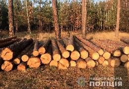 Буковинські поліцейські викрили незаконну вирубку дерев на території двох лісництв