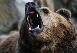 У національному парку Ергаки в Красноярському краї Росії ведмідь напав на групу туристів та з'їв підлітка