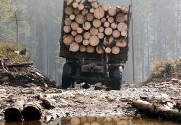 У Карпати гряде катастрофа: в Україні хочуть відновити експорт лісу-кругляка