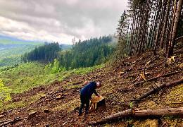 """За незаконну порубку дерев у """"Зубровиці"""" екологи виставили претензію Путильському лісгоспу на суму понад 3 млн. грн."""