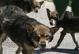 Пси кругом, як слимаки на дачах, Або чому Заслужений журналіст Агатій проти бродячих псів