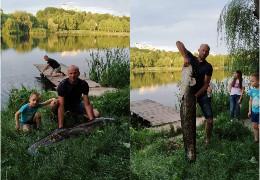 """""""Оце так рибина!"""": як величезний сом опинився у штучному озері парку """"Жовтневий"""" у Чернівцях"""