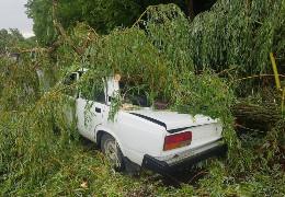 На Буковині дерево впало на машину з поліцейськими: одного травмовано