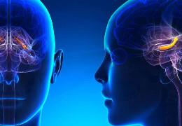 Вчені з'ясували, що людський мозок може «подорожувати в часі»