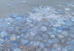 Тіло покрилося плямами після купання. На курортах Азовського моря навала медуз, вчені назвали причину явища