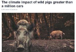 Виявляється, дикі кабани шкодять клімату більше, ніж автомобілі