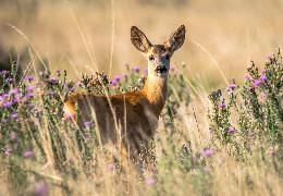 Євростандарти в охороні природи. Що таке Смарагдова мережа та чи стосується вона Чернівецької області?