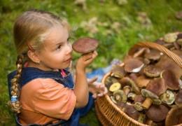 Отруїлися грибами: на Путильщині сім'ю шпиталізували до лікарні