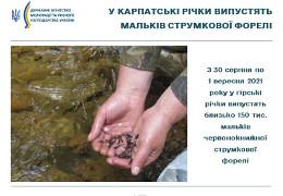 У карпатські річки випустять близько 150 тис. мальків струмкової форелі