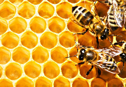 Мед і смакує, і лікує ще із сивої давнини... Розмова з буковинським пасічником