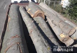 На Буковині поліцейські викрили незаконні перевезення лісодеревини. У порушників вилучили транспорт і вантаж