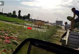 У мережі показали відео, як фермери з Херсонської області нещадно знищують кавуни