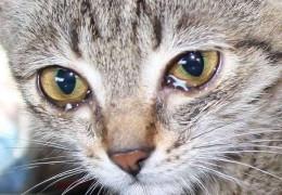 """У Дністровському районі місцевий житель бив і знущався над тваринами. """"Живодерові"""" загрожує до 8 років позбавленя волі"""