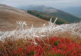 Наступної ночі на високогір'ї Буковини очікуються сильні заморозки