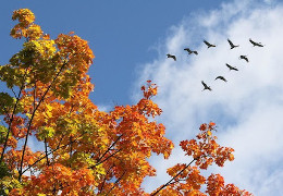Стала осінь на крило…