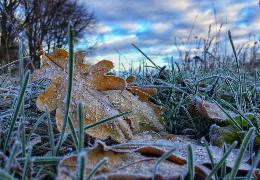 Зима на носі: на Буковині прогнозують сніг та мороз