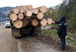 У Вижницькому районі поліцейські викрили крадія лісодеревини