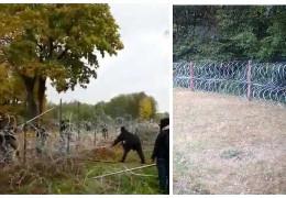 Як мігранти у Білорусі штурмують польський кордон та руйнують паркан з колючого дроту
