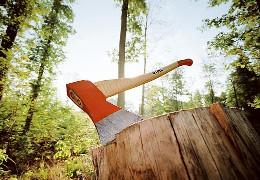 ДП «Чернівецький лісгосп» відшкодував понад 3 мільйони гривень збитків за порушення вимог природоохоронного законодавства